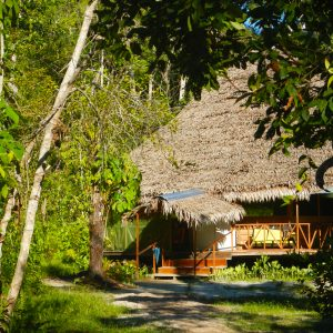 4 Weeks Retreat – YOSI OCHA – Ayahuasca Healing Centre